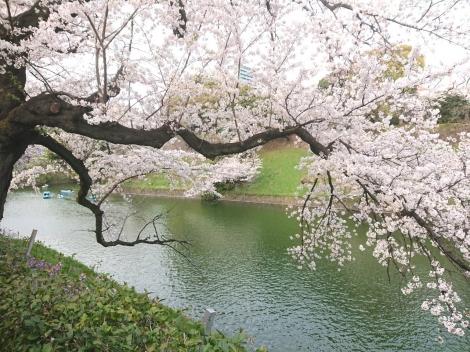 Sakura_20210406014101